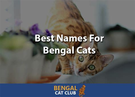 100 Of The Best Names For Bengal Cats In 2018