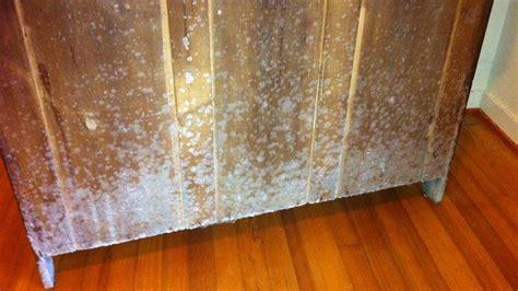 white mold dangerous    remove