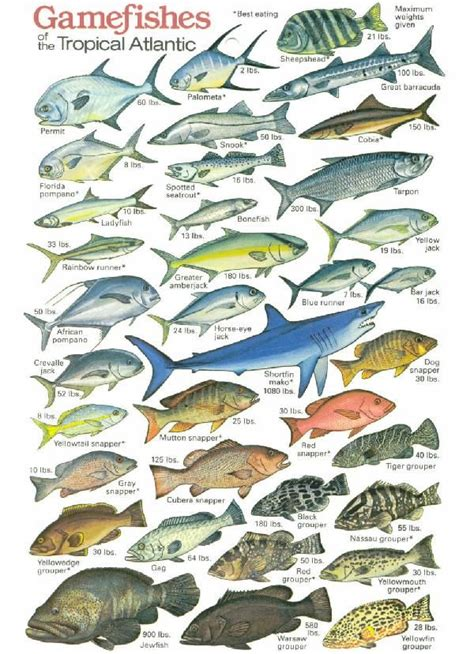 tropical fishing chart kayakingcampingbackpacking