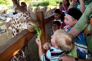 Family travel tips: How to take your kids to the zoo