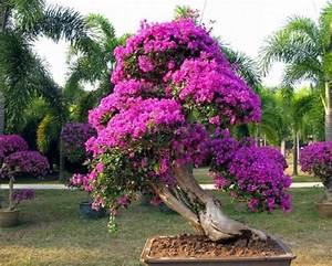 Los mejores árboles para bonsais
