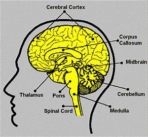 Neuroscience Resources for Kids