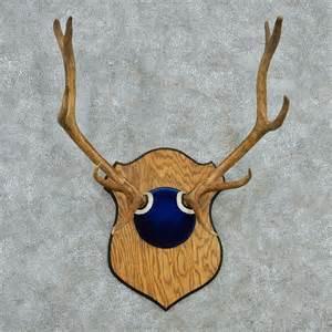 elk antlers for sale dog breeds picture