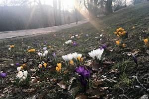 Wann Blühen Krokusse : fr hlingsanfang 2019 wann ist fr hling ~ Eleganceandgraceweddings.com Haus und Dekorationen