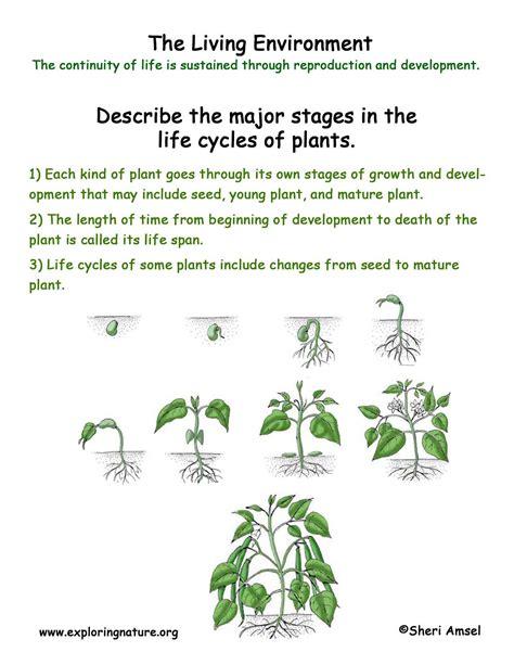 Living Environment Plant Life Cycles