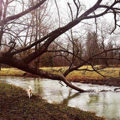 Zelten Englischer Garten by Romantisch Englischer Garten Nordteil Hurra Draussen