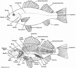 Label A Fish Printable