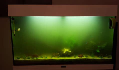 eau verte de l aquarium page 2