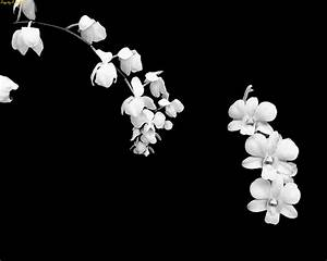 Pretty Black And White Flower Backgrounds   Bouquet Idea