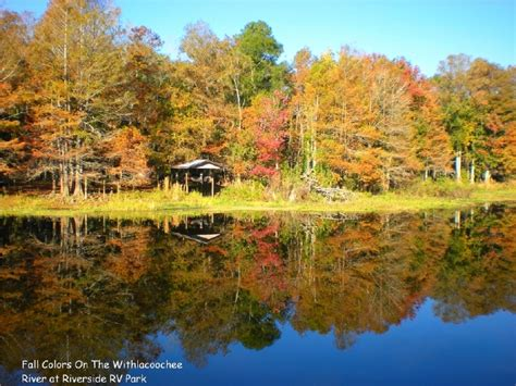 florida fall foliage riverside rv park fall foliage our autumns are spectacular
