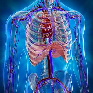 Яичники гипертония