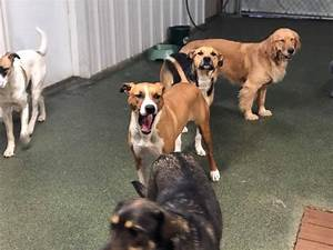 daycare breckenridge dog house With the dog house daycare