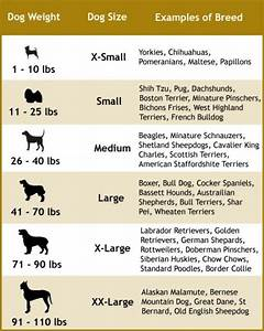 Choosing the right dog leash for your dog size and type ...