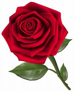 Beautiful Red Rose PNG Clipart | Maria Ortega | Pinterest ...
