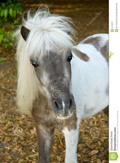 small horse stock image image  white painted farm