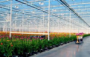Hollandia | Western Canada's Largest Gerbera Greenhouse