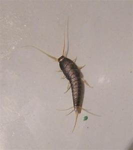 Little tiny worm like bugs topnewsnoticiascom for Silver worm in bathroom