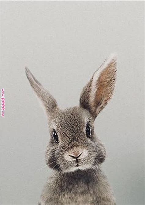 breakfast  chloes rabbit animales animales
