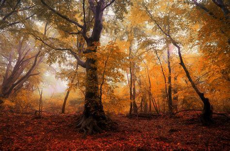 forest autumn trees  photo  pixabay