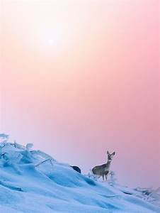 Rose Quartz Und Serenity : 152 best 2016 pantone colors of the year images on pinterest color combinations color ~ Orissabook.com Haus und Dekorationen