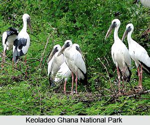 keoladeo ghana national park rajasthan
