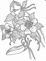 Columbine Drawing Coloring Pages Flowers Flower Drawings Pen Ink Detailed Colors Recommended Sketch Artists Template sketch template