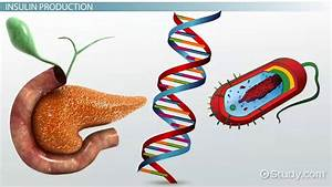 Genetic Engineering In Medicine