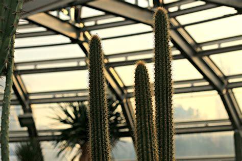 Www Botanischer Garten Berlin Dahlem De by Botanischer Garten Berlin Dahlem Berlin Tipps