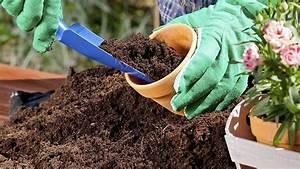 Welche Blumen Kann Man Essen : blumenerde ohne torf ist besser f r die pflanzen und die ~ Watch28wear.com Haus und Dekorationen