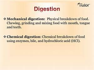 Nutrition  U0026 Digestive System