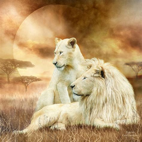 shower curtains two white lions together mixed media by carol cavalaris