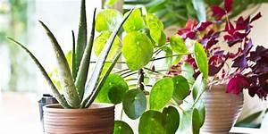 8 Benefits Of Indoor Plants  U2013 How Houseplants Improve Your