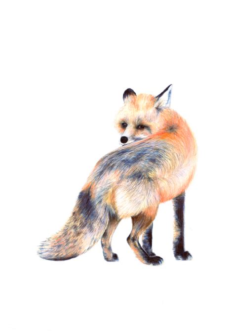 fox print animal art fox art fox illustration fox