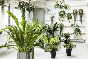 How to use feng shui to organize your plants indoors? – Bulbo®