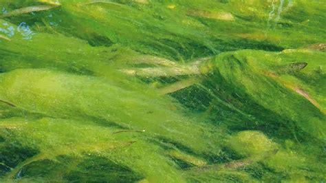 algen im teich hausmittel algen gartenteich planung bau und pflege