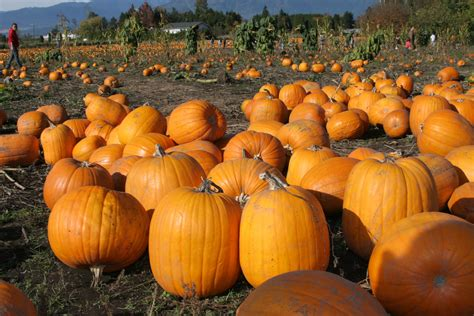 pumpkin patch trip  register  pay   front desk