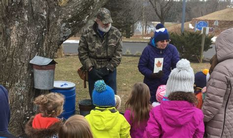 maple sugarer teaches cobb school students tree tapping