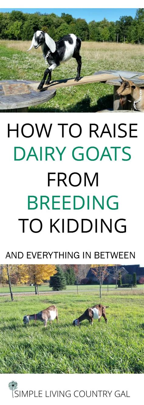 how to raise goats 71099 best self sufficiency images on pinterest homestead survival backyard farming and