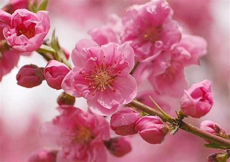 japan flowers ursi s blog