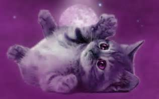 purple cat purple cat by aameliie on deviantart