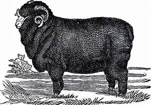 White And Black : vintage sheep clip art white and black the graphics fairy ~ Medecine-chirurgie-esthetiques.com Avis de Voitures