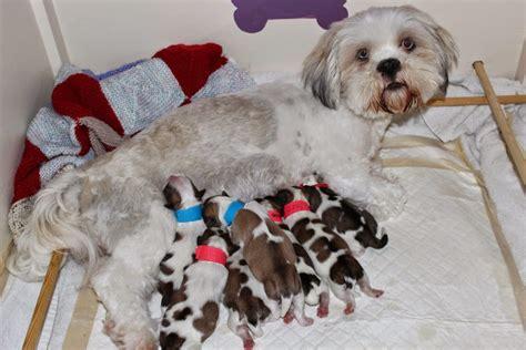 when do puppies open top 28 when do puppies open top 28 when do puppies open newborn pomeranian white leuk