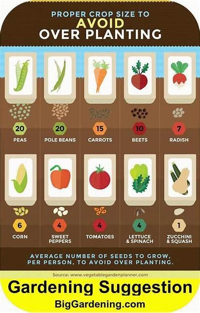 Garden Vegetable Plant Much Person Vegetables Gardening