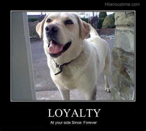 faithful dog quotes quotesgram
