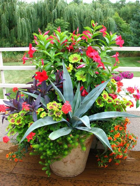 700 Best Images About Container Gardening Ideas On