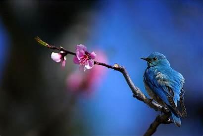 Bird Bluebird Backgrounds Wallpapers Desktop Background Birds