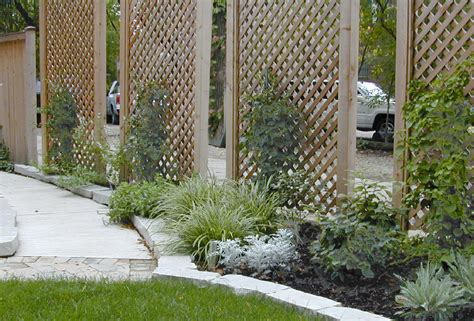pictures of vines on trellius freestanding lattice