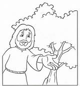 Mustard Seed Coloring Pages Parable Drawing Sheets Colouring Seeds Clipart Growing Children Getdrawings Ekladata Religion Sunday sketch template