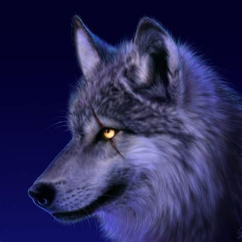 cool wolf wallpaper hd full hd   pc