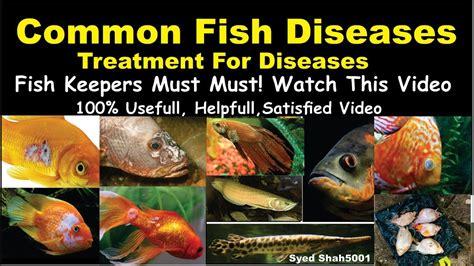 types  aquarium fish disease  treatment  diseases